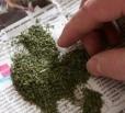 Жительница Балакова задержана со свертком марихуаны