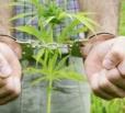 В Балаково выявлен факт незаконного оборота наркотков
