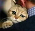 В Балаково кошка спасла хозяина от гибели на пожаре