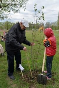 Посади свое дерево_акция_Балаково_3