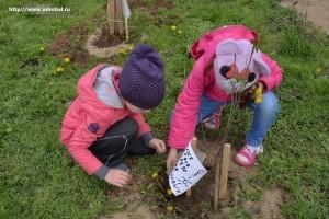 Посади свое дерево_акция_Балаково_8