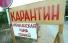 В Балаковском районе сохраняется режим ЧС из-за африканской чумы свиней