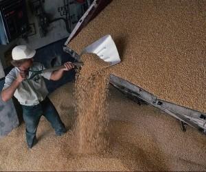 зерно_запасы_урожай