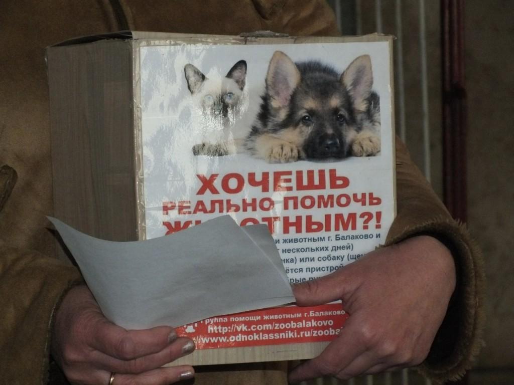 Группа помощи животным_Балаково_2