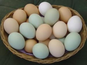 яйца22