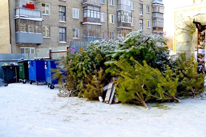 Выброшенные елки в Балаково